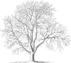 Gray and white caricature of a tree